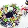 多肉植物で手作りクリスマスリース|キャンプ用品のBBQ用アルミ皿&プラチック製クリアカップでお手軽、簡単に!【oyageeの植物観察日記】
