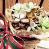 チャレンジ企画「多肉のミニ寄せ植えをX'mas ver.に!」|第2夜は、「いくつになってもうれしいね… サンタからの贈り物」【oyageeの植物観察日記】