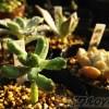 「多肉の寄せ植え、春の一掃週間」2日目! この寄せ植えの悪い原因はココ! 多肉の寄せ植えに、観葉植物は何故ダメだった?【oyageeの植物観察日記】