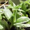 観葉植物、ついに始動! まずは、トラカンさん達をこんもりさせてあげましょう!【oyageeの植物観察日記】
