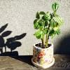 ダイソーのミニ観葉を100均グッズで楽しもう vol.19|苦手な植物と嫌いな鉢を組み合わせたら、マイナス×マイナスで「プラス思考」になる?【oyageeの植物観察日記】