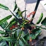 植物を格安でGETするには、12月が狙い目! 半分枯れてても、弱ってても、診断して復活させます! 人呼んで、「Dr. プランツ oyageeちゃん」?【oyageeの植物観察日記】