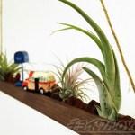 ダイソーのミニ観葉を100均グッズで楽しもう vol.21|エアプランツを「ロンリージャーニー in モニュメントバレー」風に飾り、吊るしてみよう!【oyageeの植物観察日記】