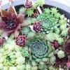 センペル丼のセンペルさんたち、お見事です! カラフル&豪華で、「よっ!これぞ、センペル万華鏡!」【oyageeの植物観察日記】