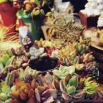 男の箱庭シリーズvol.9|クリスマスは、アレもコレもぜーんぶ集めて、テーマは「Happy Xmas」【oyageeの植物観察日記】