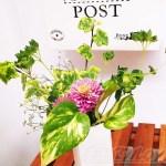 """「頑張ってる自分へご褒美を!」 花の定期便と観葉植物をコラボさせ、""""花と緑のある生活""""で癒される…【oyageeの植物観察日記】"""