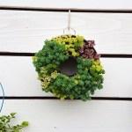 真夏に植物のリースを飾ってもいいんじゃない? あのキッチングッズにあの子達を植え込んで、サマーリースを作っChao!【oyageeの植物観察日記】