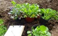 , Pěstování Chilli Papriček Ve Svém Rodišti