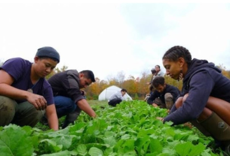 The Soul Fire team harvests greens from one of the beds at their farm in Grafton, N.Y., where they operate a CSA and several young farmer immersion programs for people of color., Capers Rumph / courtesy of Soul Fire Farm