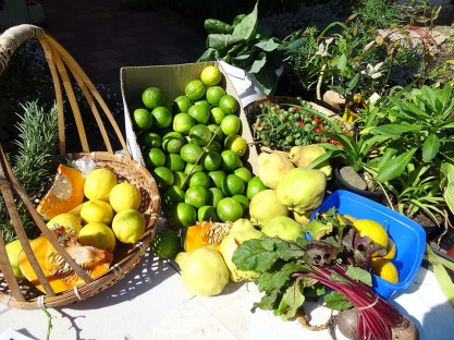 Produce Stall 2