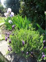 Lovely lavendar