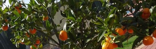 Mandarin Marmalade - Feature Image