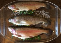 Smoked trout ready for brining...