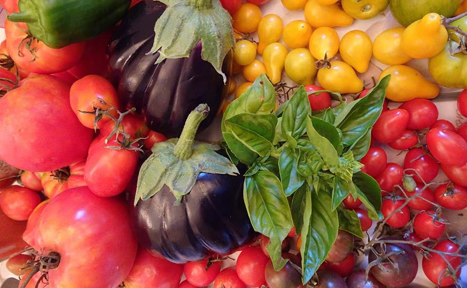 Tomatoes, tomatoes, tomatoes…..