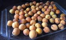 Dodgy apricots...