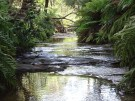 Leura Cascades #3