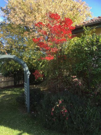 The Front Garden in Autumn - couldn't resist the splash of red from the leaves of the