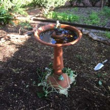Birdbath in place and underplanted with Arisarum vulgare (Hooded cowl)