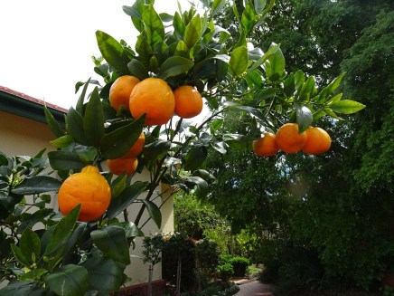 Mandarin Marmalade - Blog 3