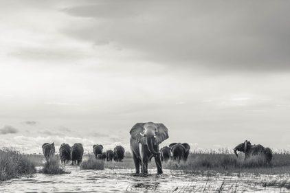 elephants-DEF