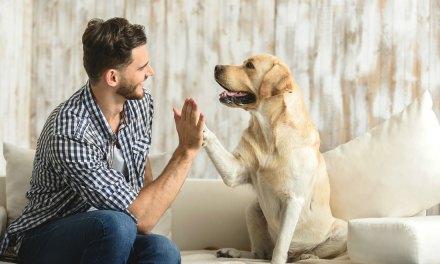 Aromaterapia Para Pets – Veja Benefícios Para Seu Animal De Estimação