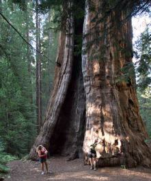 Boole Tree, Sequoia National Forest, 2006. Photo Flickr