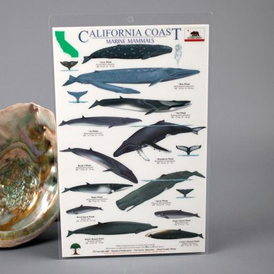 Marine Mammals Card