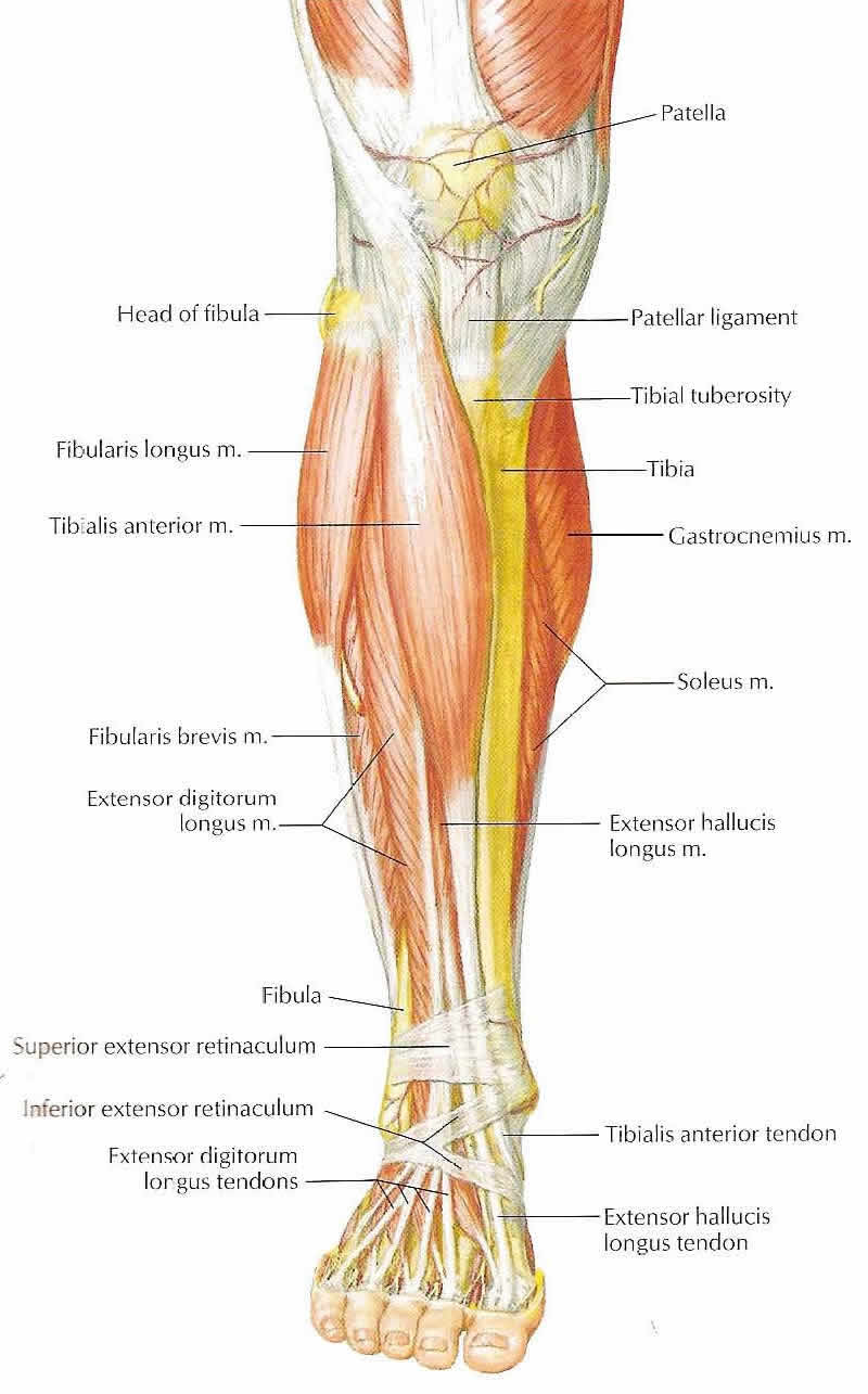 Runners Leg Assessment Make Sure That You Avoidrecover From Injuries