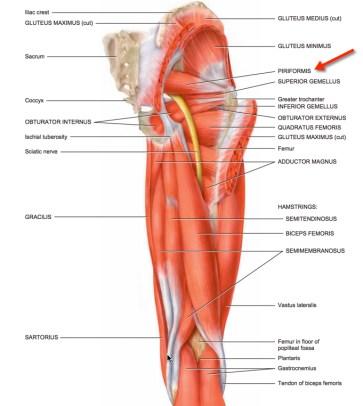 piri muscle