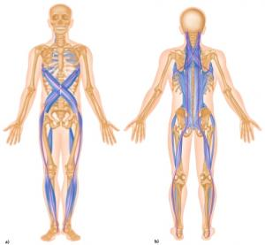 Anatomy-Trains