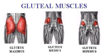 gluteal-muscles