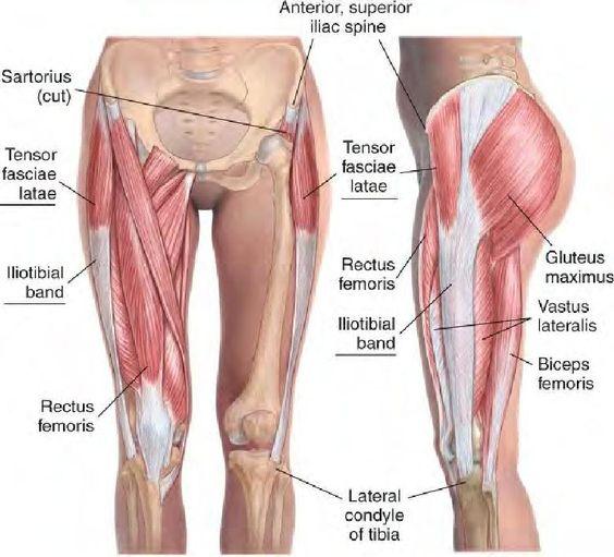 tfl anatomy