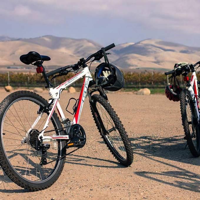 vineyard biking tours