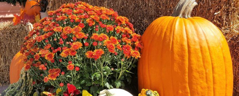fall on delmarva