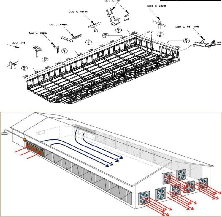 Control Low Cost Poultry Shedfarm For Broiler Layer