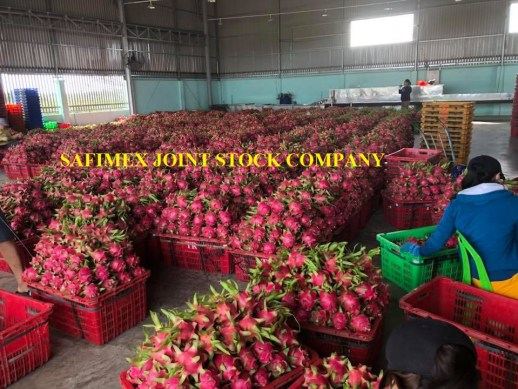Dried Dragon Fruit Slices From Vietnam With Competitive Price 2018
