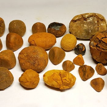 Image result for ox Gallstones alibaba