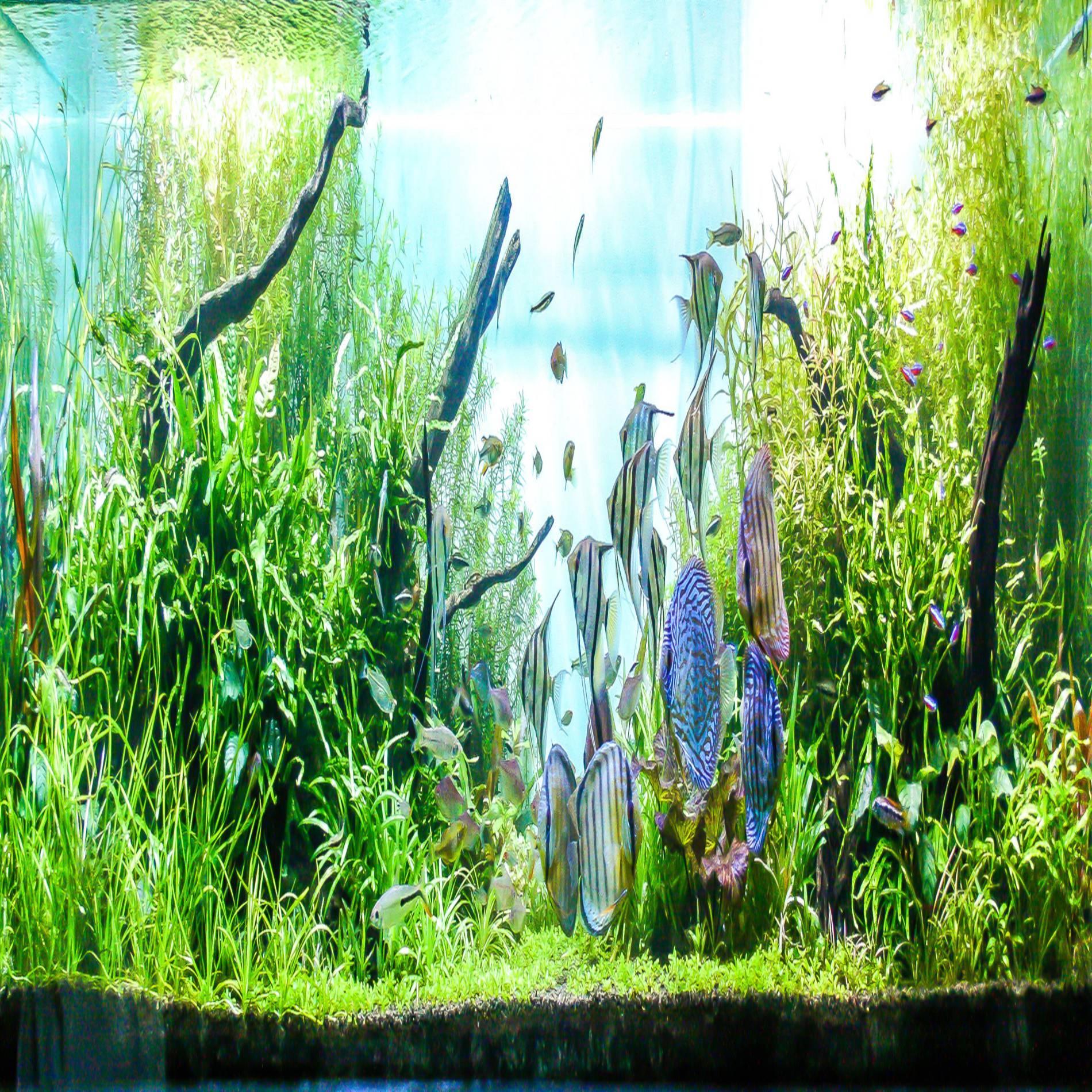 water grass style aquarium fish tank poster thicken pvc adhesive background sticker wallpaper poster aquarium backdrop decor buy aquarium background