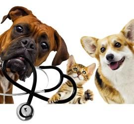 Scalis. Mediação de Seguros de Saúde e Responsabilidade Civil de Animais Domésticos