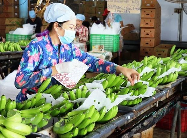 Newspaper: Fruit & vegetable exporters should tap into the Nordic's niche market