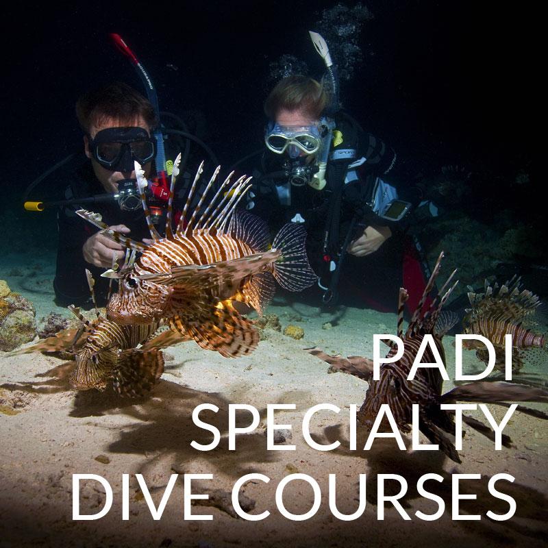 padi specialty dive courses puerto galera
