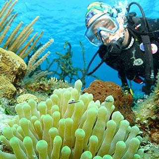 naui underwater ecologist