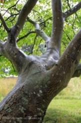 Sous les feuilles