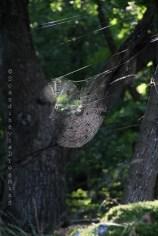 Toiles d'araignées dans la lumière