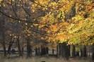 Jeu de lumière dans les feuilles d'automne
