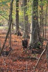 Les cerfs se cachent au fond du bois