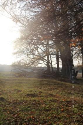 Lumière d'automne dans les arbres