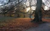 Lumière rasante de fin de journée à Dyrehaven