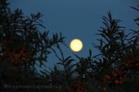 Pleine lune dans le ciel de Skagen