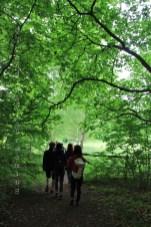 Dans les bois
